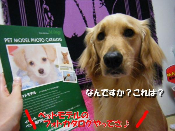 DSCF6002_20100526104545.jpg