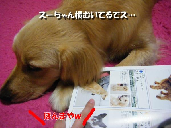 DSCF6005_20100526104543.jpg
