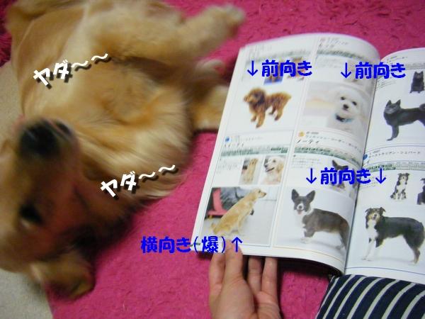 DSCF6006_20100526104543.jpg