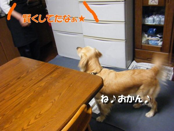 DSCF6020_20100523232354.jpg