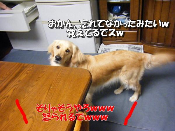 DSCF6022_20100523232353.jpg