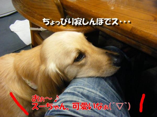 DSCF6028_20100523232351.jpg