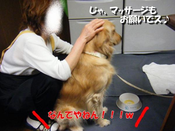 DSCF6048_20100523232522.jpg