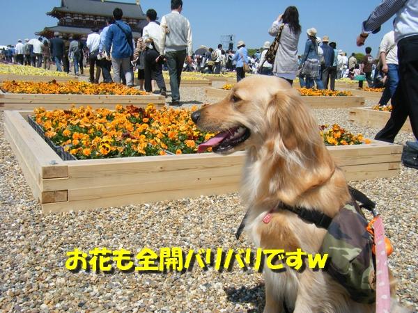 DSCF7009_20100503005333.jpg