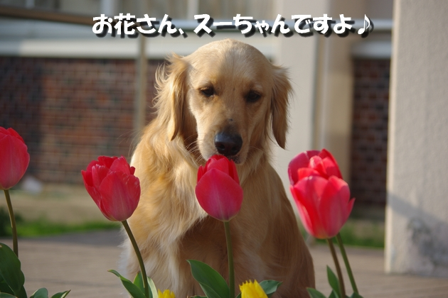 IMGP0029_20100328230921.jpg