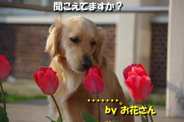 IMGP0030_20100328230920.jpg