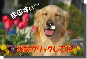 IMGP0047_20100328230918.jpg