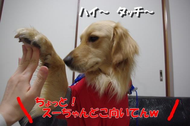 IMGP0156.jpg