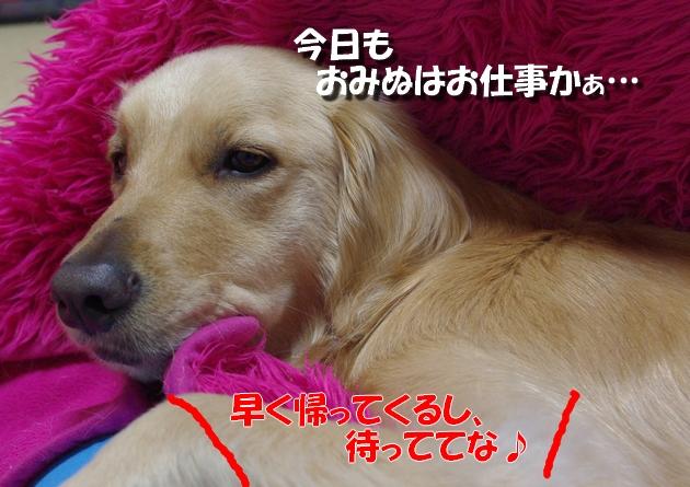 IMGP01781.jpg