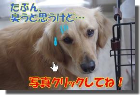 IMGP0249_20100406002540.jpg