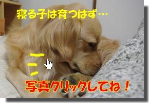 IMGP0341.jpg