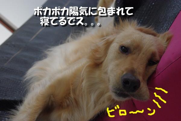 IMGP0354.jpg