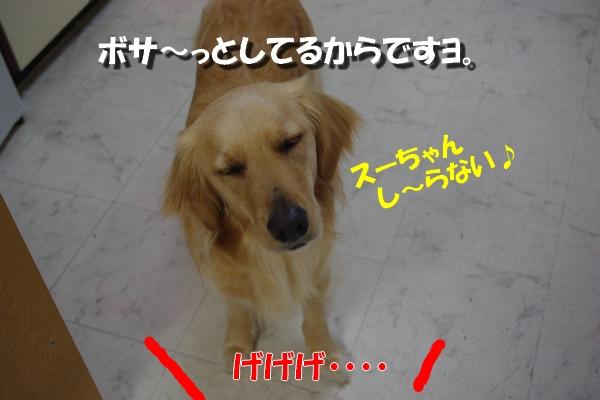 IMGP0367_20100416001404.jpg