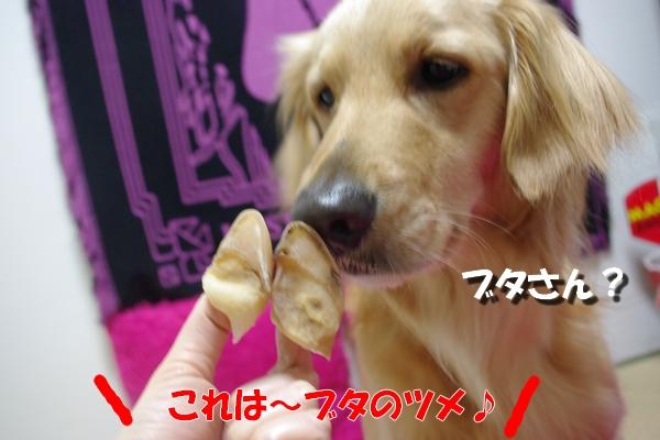 IMGP0374_20100412234422.jpg
