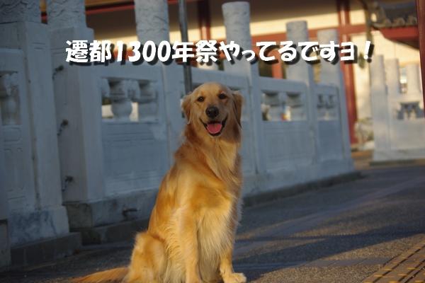 IMGP3599.jpg