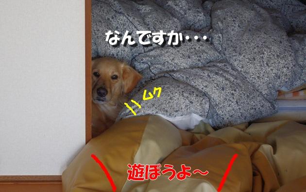 IMGP41031.jpg