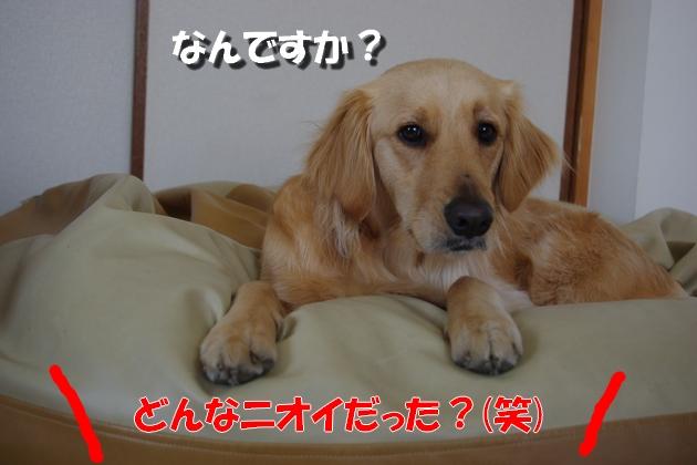 IMGP41511.jpg