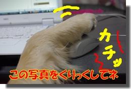 IMGP4193a.jpg