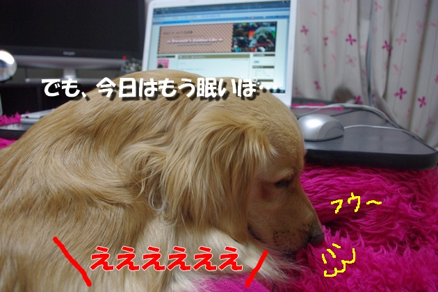 IMGP4195a.jpg