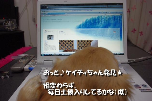 IMGP4201a.jpg