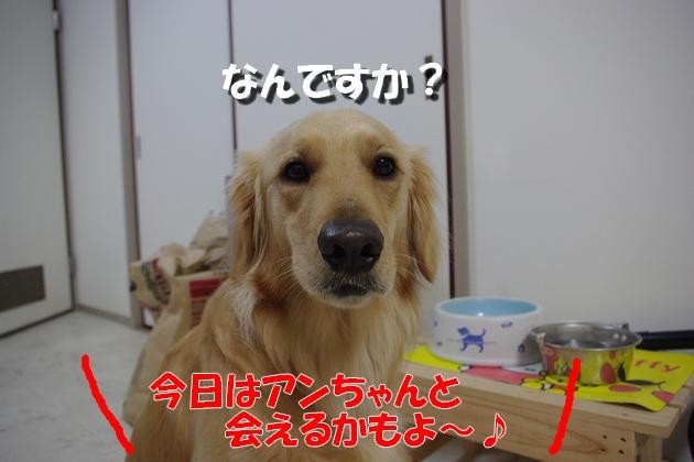 IMGP4224a.jpg