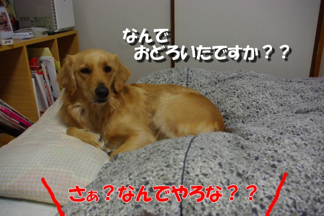 IMGP5697a.jpg