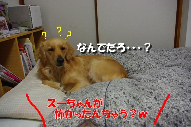 IMGP5698a.jpg