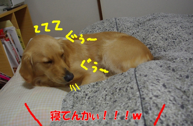 IMGP5700a.jpg