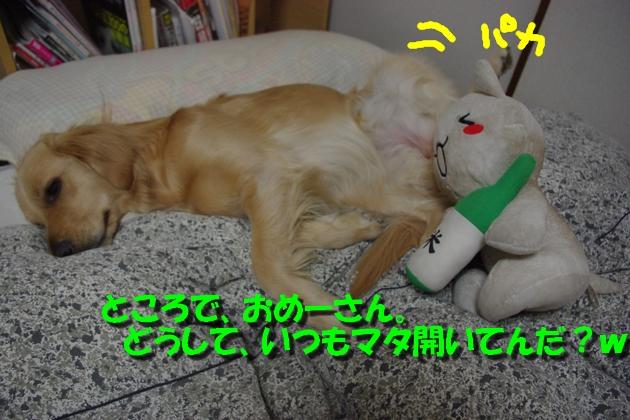 IMGP9043a.jpg