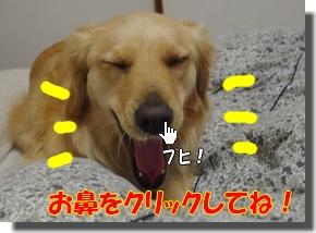 IMGP9054a.jpg