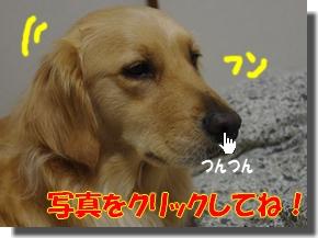 IMGP9057a.jpg