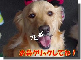 IMGP9139_20100308003810.jpg