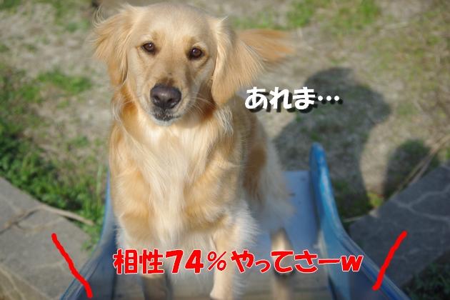 IMGP9248_20100311231331.jpg