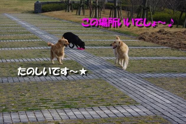 IMGP9419_20100315115210.jpg