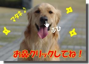 IMGP9441_20100320121935.jpg