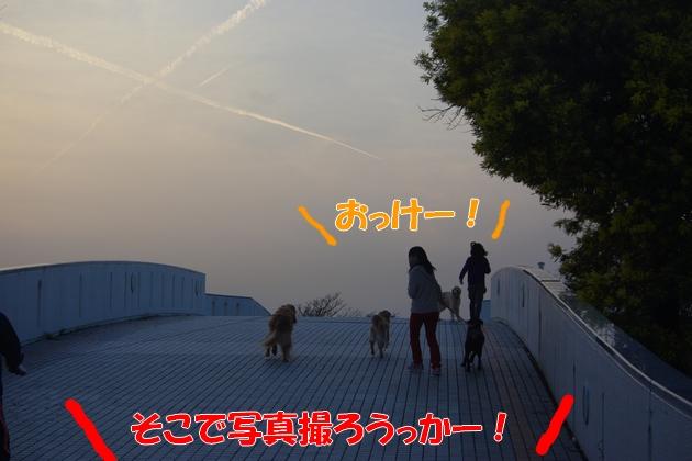 IMGP9878.jpg