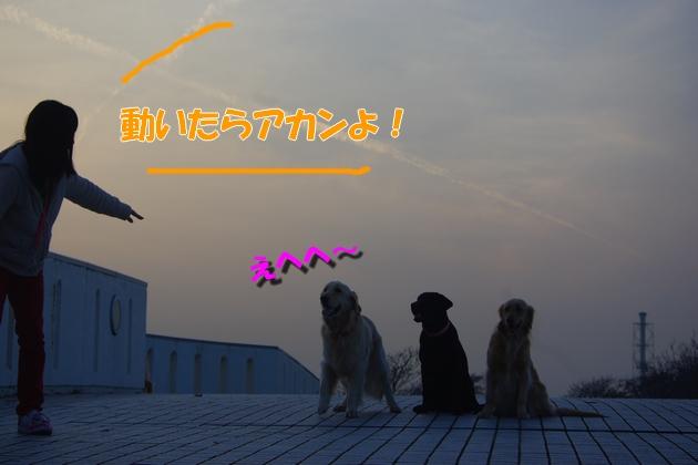 IMGP9885_20100320121845.jpg