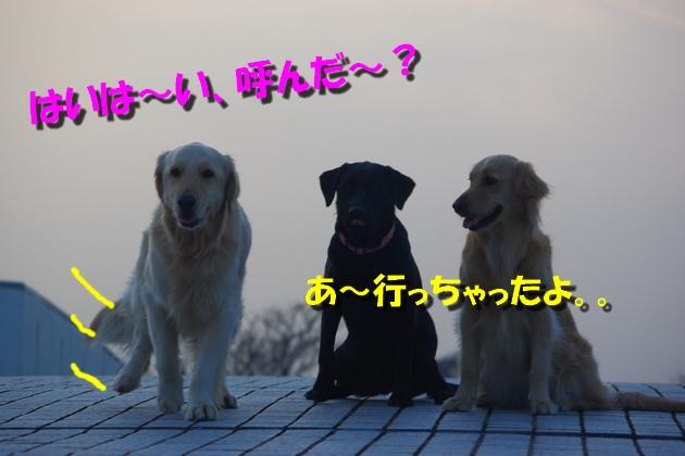 IMGP9892_20100320121935.jpg