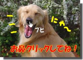 IMGP9906_20100327123844.jpg
