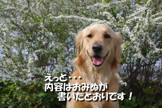 IMGP9935_20100327123843.jpg
