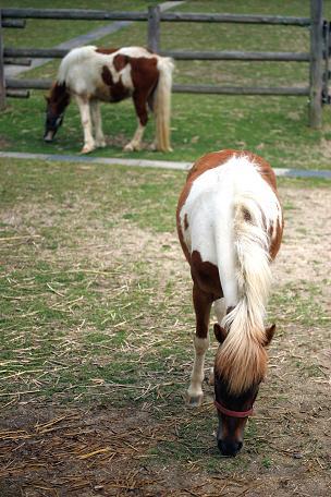 鞍が池公園 059