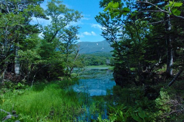 北海道の知床半島(知床五湖)001