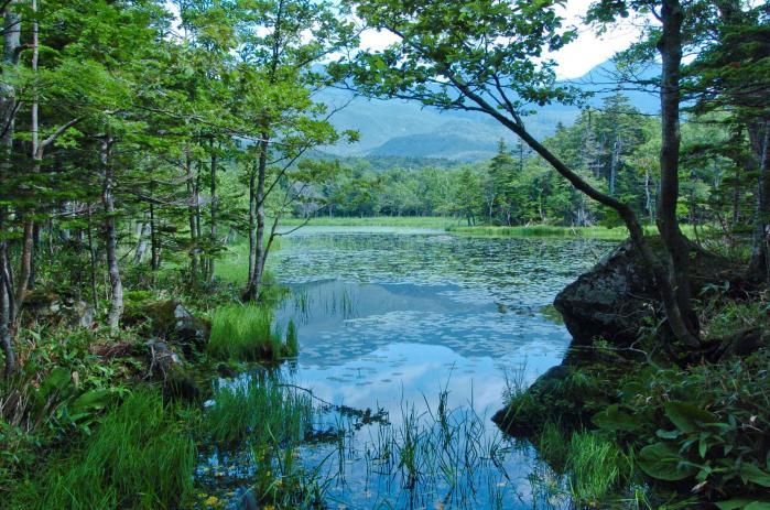 北海道の知床半島(知床五湖)002