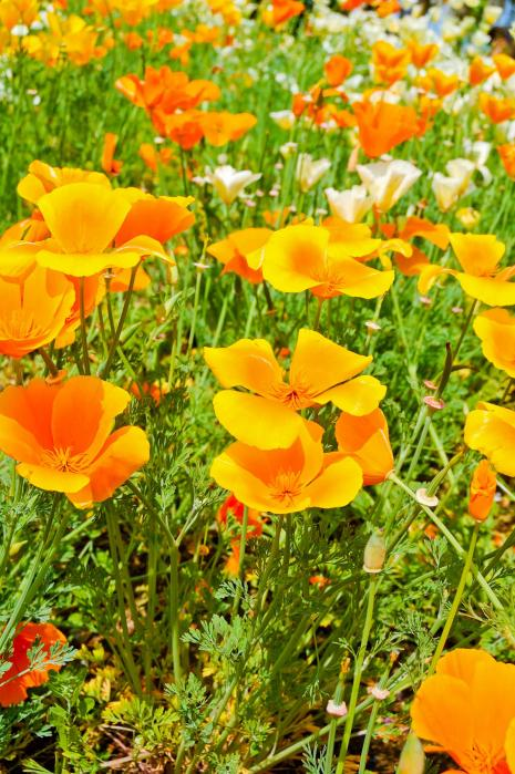オレンジ色の綺麗な花