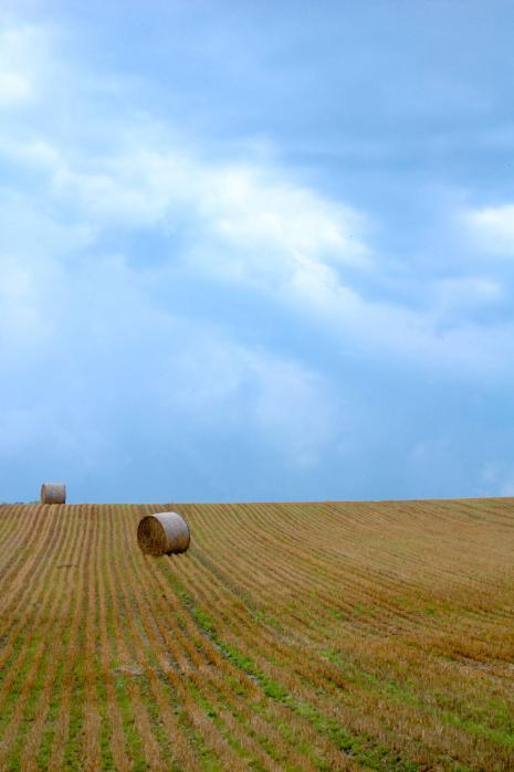 北海道の干し草ロール