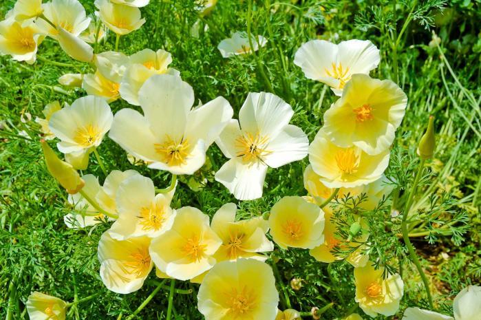 黄色のきれいな花