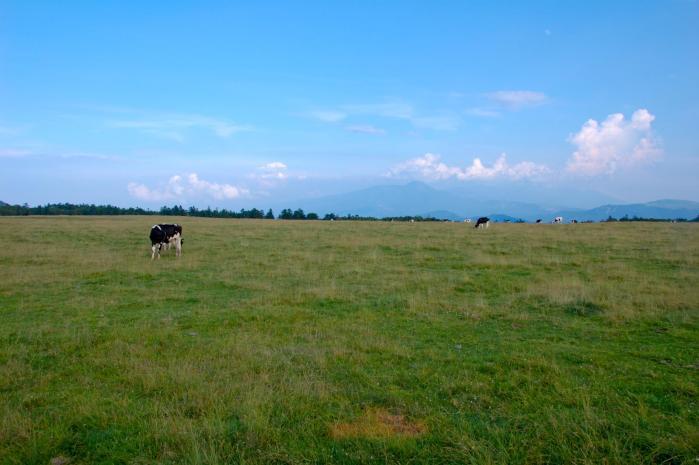 草原と牛001