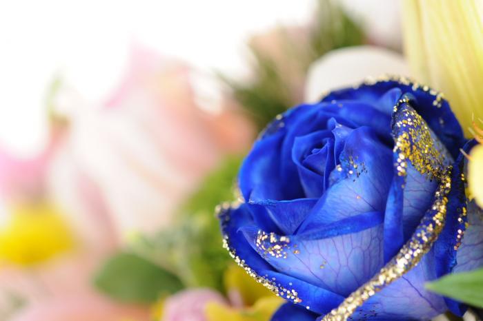 青いバラの写真(染色バラ)