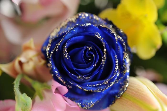 青く染色されたバラの花