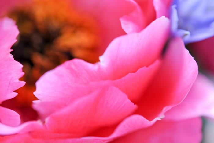 芍薬の花(中心)
